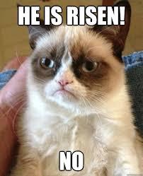 He Is Risen Meme - he is risen no grouchy christmas cat quickmeme