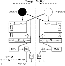on an electrical diagram a dashed line indicates an on on images