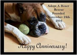 rescue a boxer dog aabr founded november 24 2004 adopt a boxer rescue
