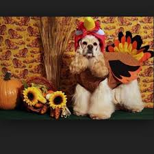 these 5 dogs dressed as turkeys wish you a happy thanksgiving
