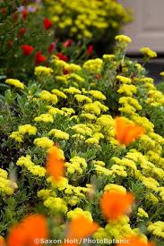 208 best ca native landscaping ideas images on pinterest