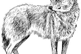 gray wolf clipart gray wolf clip art free clipart images 2