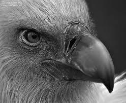Seeking Vulture The Vulture