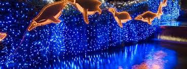 oregon zoo lights 2017 zoolights value nights portland salem or nov 27 2017 5 00 pm