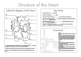 four human biology diagrams to label heart lungs digestive