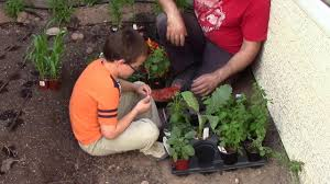 desert backyard permaculture design part 6 planting the garden