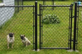 fence outside dog fence satisfying u201a dazzle outside dog fences