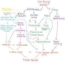 Blood Pressure Map Low Blood Pressure Headache Anatomy Blood And Medical