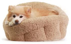 6 best dog beds for small dogs petite canine comfort