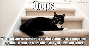 Cat Sitting Meme - 50 cat memes grab bag edition cattime