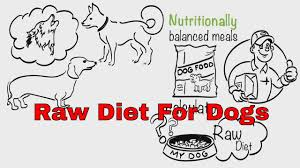 bella and duke raw feeding for dogs 100 natural free uk delivery