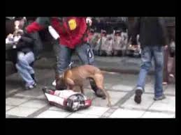 l american pitbull terrier a p b t am pit bull terrier fight to a finish iv part two youtube