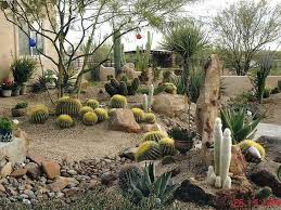 Landscaping Wood Chips by Wood Chips Landscaping In Desert Google Search Garden And