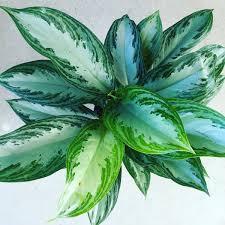 good houseplants for low light low light houseplants good earth garden center and landscaping
