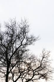 dead tree branch against blue sky filtered image processed vintage