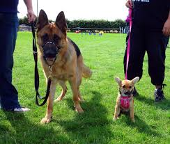 dog activities in merseyside cheshire warrington liverpool and nw