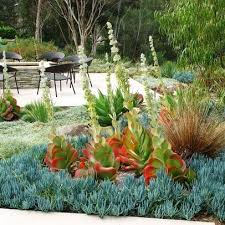 54 best succulent gardens images on pinterest succulent