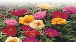Flower Seeds Online - kraft seeds kraftseeds twitter