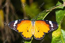 butterfly tattoos designs going up womens back 55 best ideas