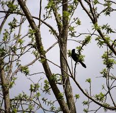 bird in a tree photograph by colaiano