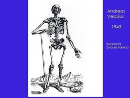 Human Anatomy And Physiology Terminology Human Anatomy And Physiology I Chapter 1 Definitions Terminology