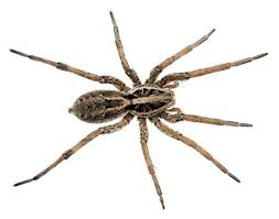 spider alchetron the free social encyclopedia