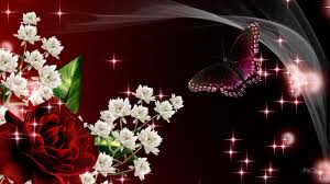 flowers roses flowers butterfly firefox persona silk glow