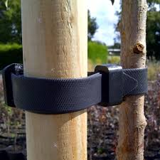 tree stake and tie for trees up to 3m planting essentials