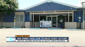 new owner plans to transform south tampa pet resort u0026 doggy day
