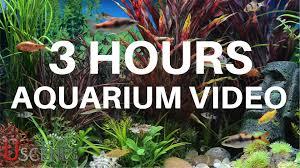 3 hour aquarium video by uscenes free tv screensaver youtube