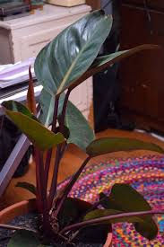 homelife top 15 indoor plants the new indoor plant trends u0026 why they are good for you recycled