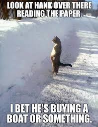 Cat Memes Generator - envious cat weknowmemes generator