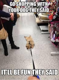 Black Friday Shopping Meme - 15 dogs who don t approve of your black friday shopping barkpost