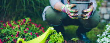 get into the garden how to plant a flower just in time for summer