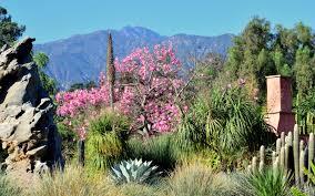 los angeles native plants l a county arboretum u0026 botanic garden plant info