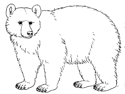 bear drawings worksheet guide pictures clip art