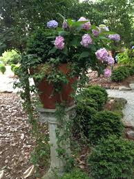 Potted Plants For Patio Growing Hydrangeas In Pots Container Garden Ideas Hgtv