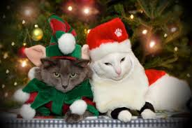 Cat Climbing Christmas Tree Video 27 Cats That Are Totally Ready For Christmas Blazepress