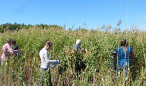 native alternatives to invasive plants war on invasive plants relies on many weapons island institute