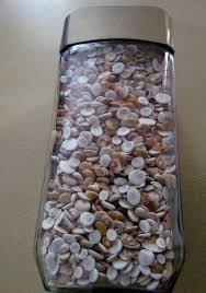 shiva seahells brown cat eye shells seashell supply craft