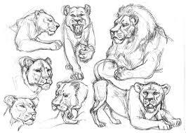 garygeraths animal drawing