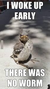Meme Bird - angry bird meme