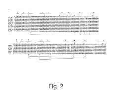 patent us20050033031 methods for humanizing rabbit monoclonal