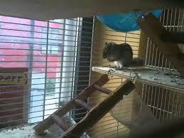 gabbie scoiattoli la scoiattola squicky tornata ieri dal letargo