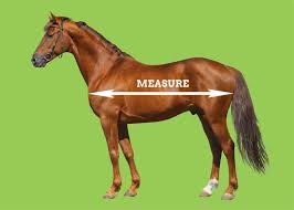 Rug Measurement How To Measure Your Horse For A Rug