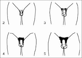 men pubic hairstyles pubic hair vs bald archives feilong us