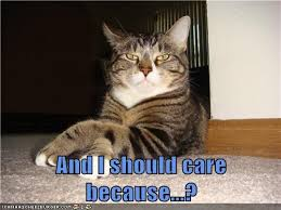 Sassy Cat Meme - and i should care because lolcats lol cat memes funny