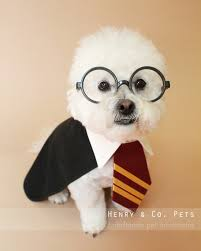 Dog Costume Halloween Harry Potter Dog Costume Halloween Dog Costume Halloween Pet