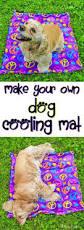 make a flirt pole exercises dog and dog supplies