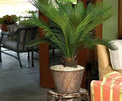 large houseplants pretty easy to grow houseplants along with low light homes